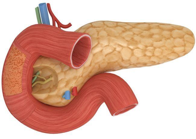З огляду на підшлункової залози