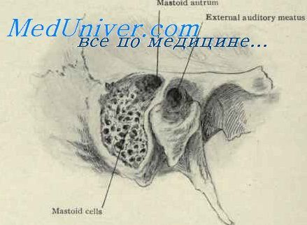 розвиток статевих клітин