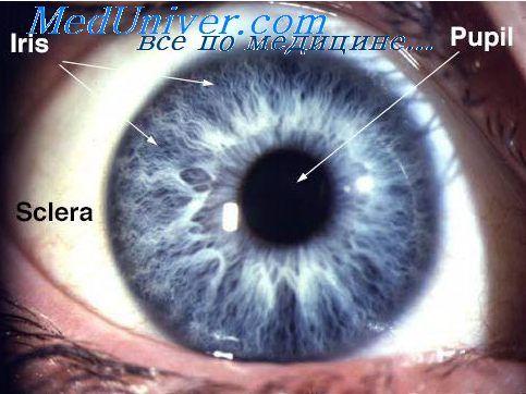 Регуляція акомодації. Фокусування очей
