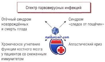 парвовірусна інфекція