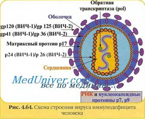 Вірус імунодефіциту людини (ВІЛ)